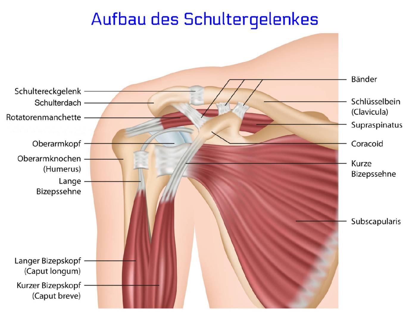 Praxis Dr. Kirchmeyer Gelsenkirchen, Schultergelenk