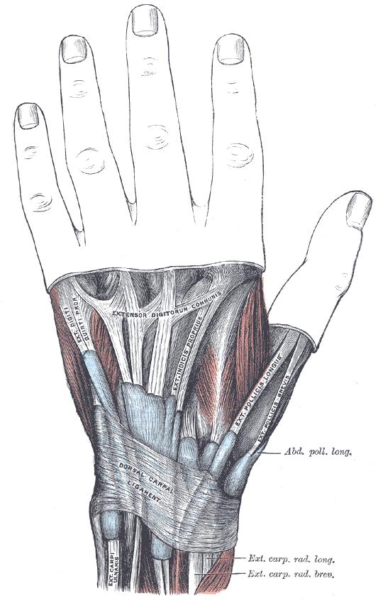 Heidemann Hand Und Ellenbogenchirurgie In Hürth
